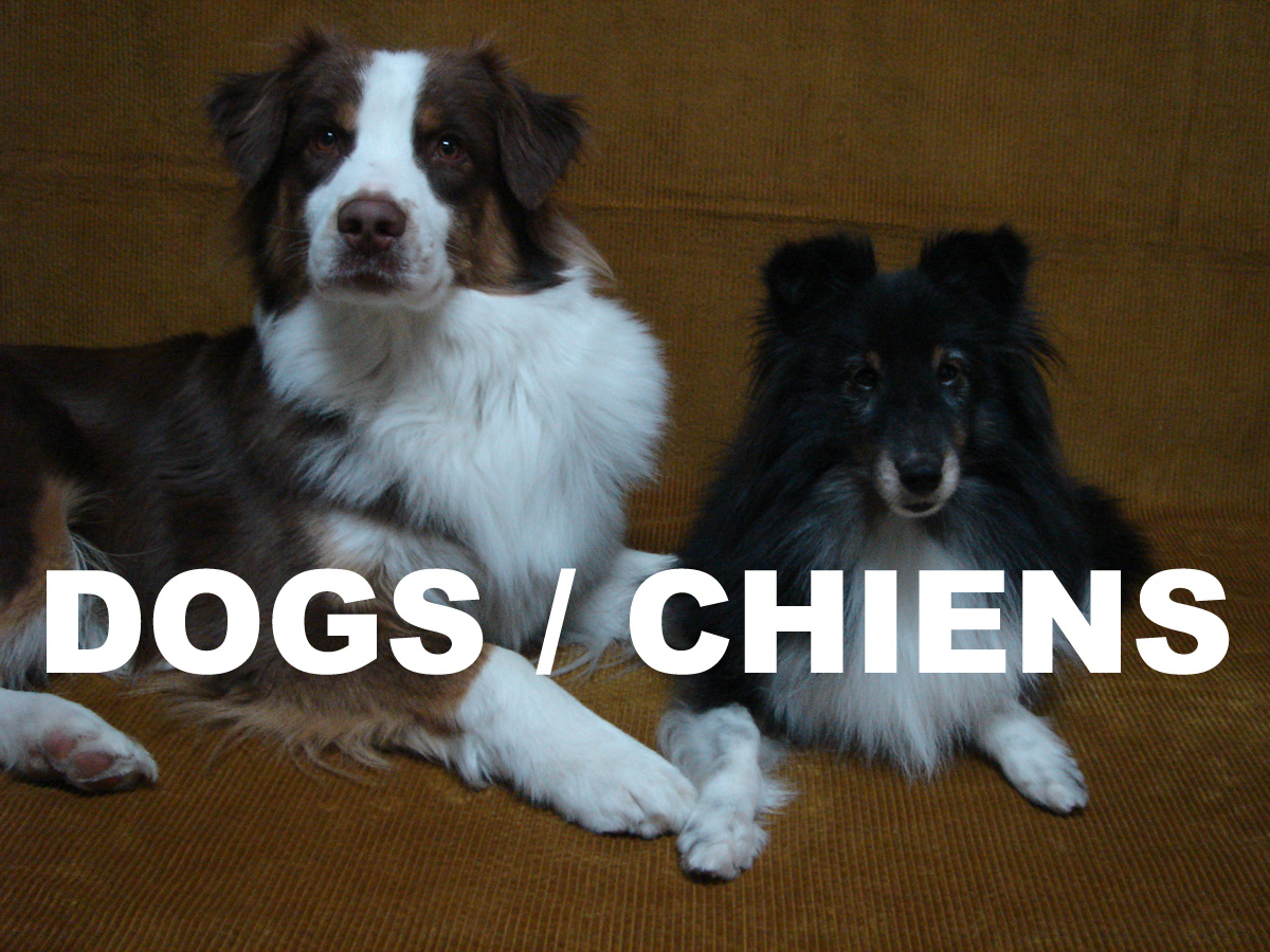 DOGS CHIENS